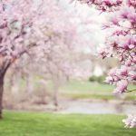 春ドラマ期待度ランキング